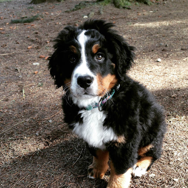 Minimum Age Requirement for Dogs at Puppy Love Pet Care Centre