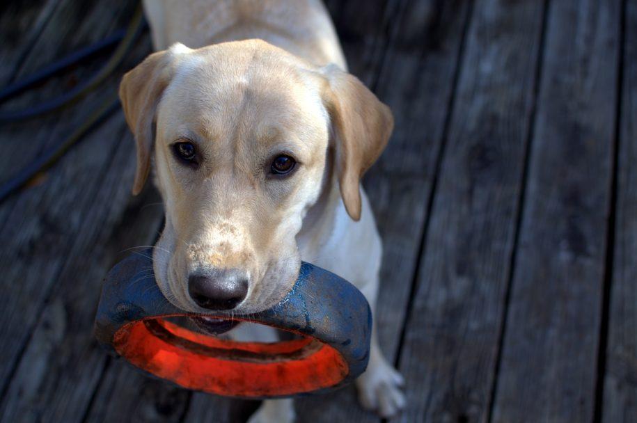 dog boarding victoria bc - toys