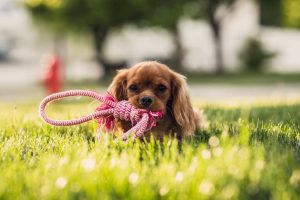 dog boarding - toys to bring